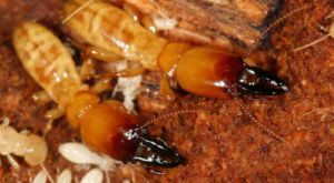 termite inspection and extermination