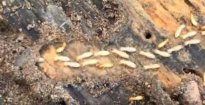 pest control / termites
